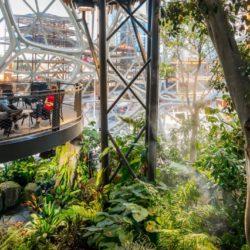 Облачный лес и птичьи гнезда: как выглядят сферы Amazon сегодня