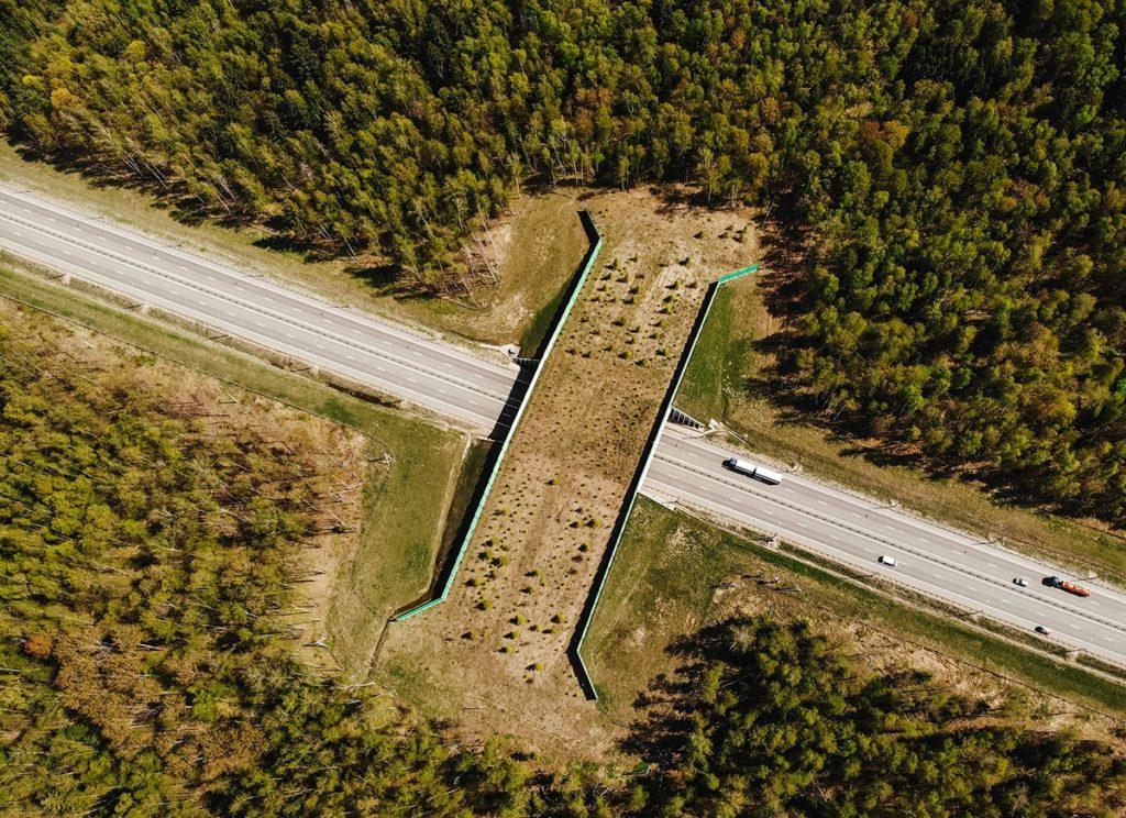 В России становится больше «экодуков» - специальных мостов для перехода диких животных через автотрассы
