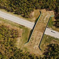В России становится больше «экодуков» — специальных мостов для перехода диких животных через автотрассы