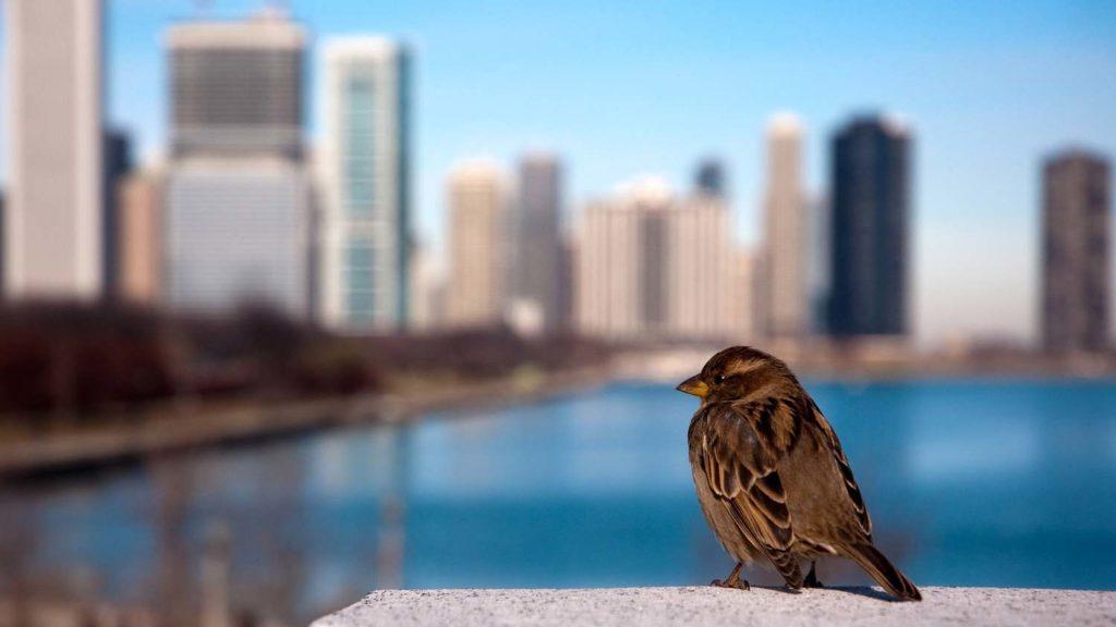 Нью йорк закон по защите птиц