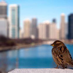 В Нью-Йорке вводится строительный стандарт для высотных зданий, предусматривающий защиту птиц