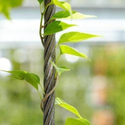 Системы зеленых фасадов из сетки, проволочных тросов и канатов